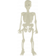 Plastic Skeleton Toy
