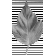 Leaf Template 032
