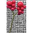 The Nutcracker - Holly Berries