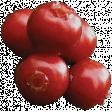 Woodland Winter - Berries