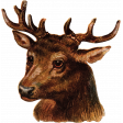 Woodland Winter - Deer Ephemera