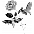 Insect Stamp Template 016
