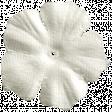 Summer Splash - Cream Flower