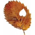 Falling For You -Brown Leaf 2
