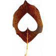 Falling For You - Brown Leaf 1