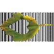 Falling For You - Green Leaf 2