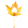 Falling For You - Yellow Leaf 3