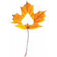 Falling For You - Yellow Leaf 1