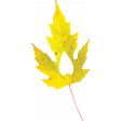 Falling For You - Yellow Leaf 4