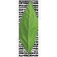 Let's Get Festive - Green Leaf 1