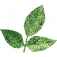 Let's Get Festive - Green Leaf Cluster 2