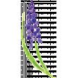 Flower 45
