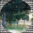 Golf Circle Trees