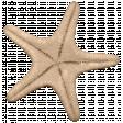 Hollister - Starfish