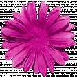 Daisy - Flower 1