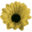 Daisy - Flower 2