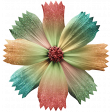 Flower September 2020