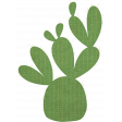 Mystery Cactus