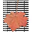 Fall Leaf 05-Bear Wallow AZ
