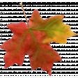Fall Leaf 06-Bear Wallow AZ