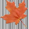 Fall Leaf 08-Bear Wallow AZ