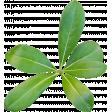 Leaves green 01