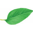 ABM-YayPizzaNight-Greenery-BasilLeaf-01
