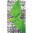 ABM-YayPizzaNight-Greenery-BasilLeaf-02