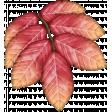Pumpkin Spice Leaf #4