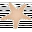 Down Where It's Wetter 2 - starfish 1