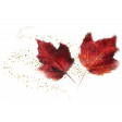 Maple Leaf Transfer