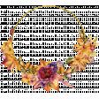 Floral Elegance Wildflower Frame 2