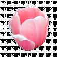 Pink Tulip 1