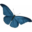 Into the Woods - Butterfly