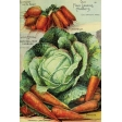 Garden Tales Journal Cards - Cabbage and Carrots 4x6