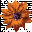 Harvest Pie Orange Leafy Flower