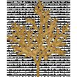 Sunshine and Snow Golden Juniper Fir Branch