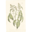 May Good Life - Luncheon Antique Botanical Card