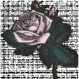 Summer Twilight - Pink Rose
