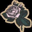 Summer Twilight - Pink Rose Sticker