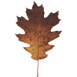 Orchard Traditions Fall Leaf