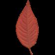 Orchard Traditions Orange Fall Leaf