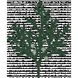 Warm n Woodsy Juniper Fir Branch