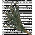 Warm n Woodsy Glitter Pine Branch