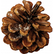 Warm n Woodsy Snow Dusted Pine Cone