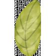 Delightful Days Watercolor Leaf