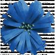 Coastal Spring Blue Flower