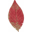 Old Farmhouse Red Leaf