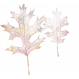 Frosty Forest Leaves Stamp