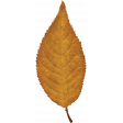 Copper Spice Yellow Leaf